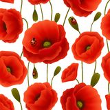 Poppy seamless pattern Stock Images