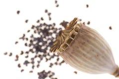 Poppy seed Stock Image