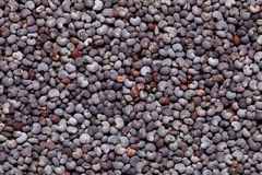 Poppy seed background Stock Image