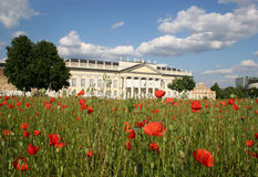 Poppy seed field in frint of the Fridericianum in royalty free stock images