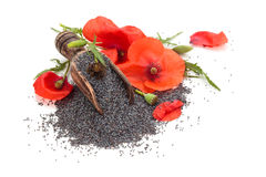 Poppy seed. Stock Photo