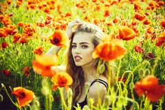 Poppy seed and girl with long curly hair royalty free stock photos