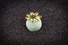 Poppy seed pod Stock Photography