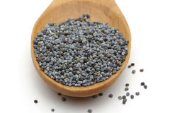 Poppy seed Stock Images