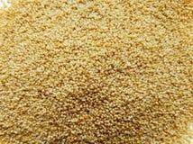 Free Poppy Seeds Stock Image - 99429921