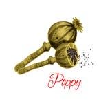 Poppy seeds flavoring vector icon Stock Photo