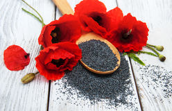 Poppy seeds and flowers royalty free stock images