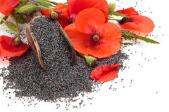Poppy seeds. Stock Images