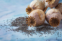 Poppy seeds and heads on wooden background Royalty Free Stock Photos