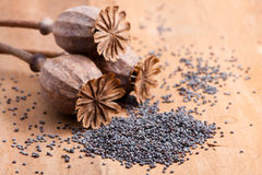 Poppy seeds Stock Photo