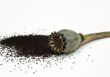 Poppy Seeds minúscula de Poppy Pod oriental aberta Fotografia de Stock