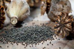 Poppy seeds and seedpods Stock Photography