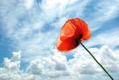 Poppy in sky Stock Images