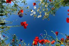Poppy sky Stock Image