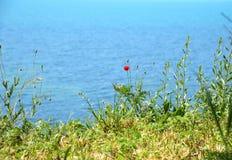 Poppy on steep seashore Royalty Free Stock Photography