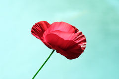 Poppy style. Poppy Flower Royalty Free Stock Images