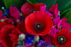 Poppy, sweet pea and corn flowers. Bouquet close up Royalty Free Stock Photos