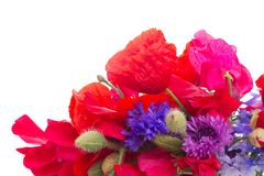 Poppy, sweet pea and corn flowers Stock Photography