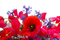 Poppy, sweet pea and corn flowers Royalty Free Stock Images
