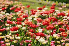 Colorful meadow flowers stock photography