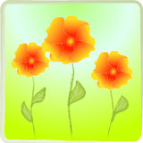 Poppy. Vectors illustration. Orange poppies on a green background. Vectors illustration Vector Illustration