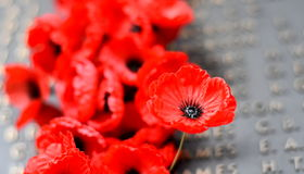 Poppy wall lists the names of all the Australians who died in service of armies Royalty Free Stock Image