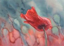 Poppy With Rain Drops Watercolor Stock Image
