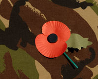 Poppy worn on comabt jacket Stock Images