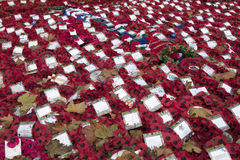 Poppy Wreaths and poppies amongst the leaves at the War Memorial on Whitehall London England UK Stock Image
