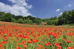 Poppyfield Photos libres de droits