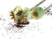 Poppyheads met papaver Royalty-vrije Stock Afbeeldingen
