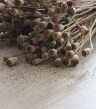 Poppyheads sur la table en bois photos stock