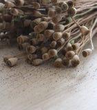 Poppyheads on wooden table stock photos