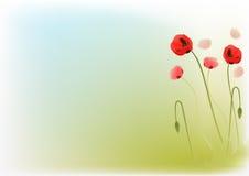 poppys красные иллюстрация вектора