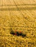poppys острова Стоковая Фотография