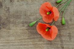 Poppys Royalty Free Stock Photos