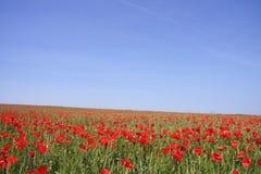 Poppys Stock Image