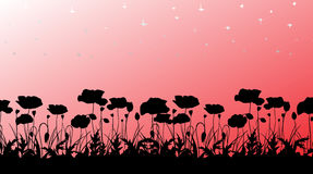 Poppys silhouette Royalty Free Stock Images
