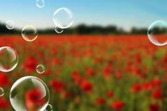 Poppys. Soap bubbles Royalty Free Stock Photography