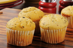 Poppyseed muffins Royalty Free Stock Photo