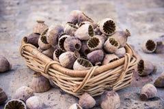 Poppyseed, Poppy, Seed, Nature Stock Image