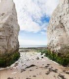 Populär Manche för botanikfjärdLa kust för engelsk kanal, Kent, Englan Royaltyfria Bilder