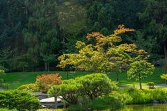 Japanese Garden in Seattle`s Washington Park Arboretum Stock Photos