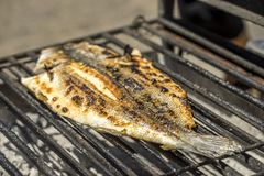 Popular barbecued fish eaten in Portugal . Popular barbecued fish eaten in Portugal called sea bass or robalo stock images