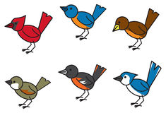 Popular Birds. Six common and popular birds found throughout north american residential areas Stock Images