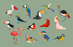 Popular Birds Icon Set. Flat design vector birds icon set. Cartoon bird collection. Popular birding species icons. Exotic bird line art set vector illustration