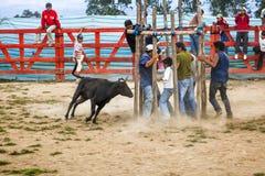 Popular bullfights (Toros de Pueblo) Stock Image