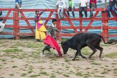 Popular bullfights (Toros de Pueblo) Royalty Free Stock Images