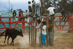 Popular bullfights (Toros de Pueblo) Stock Photography