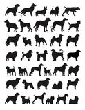 Popular dog breeds royalty free illustration